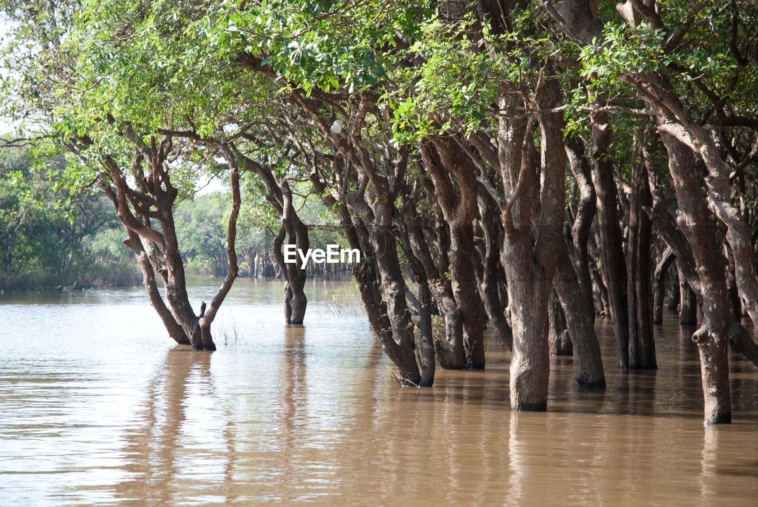 TREES ON SEA