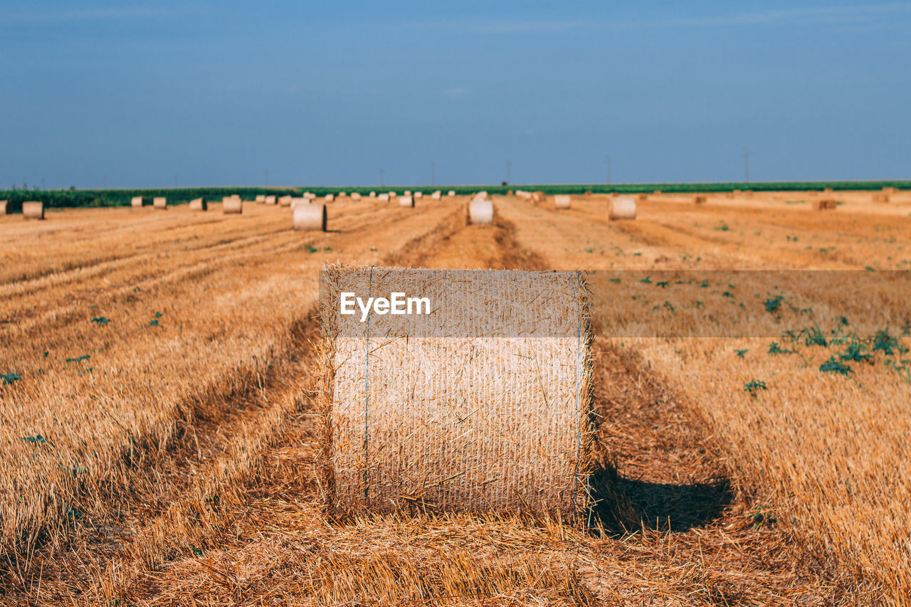 landscape, land, field, agriculture, rural scene, sky, farm, environment, scenics - nature, nature, tranquil scene, tranquility, beauty in nature, day, no people, hay, bale, sunlight, plant, brown, outdoors