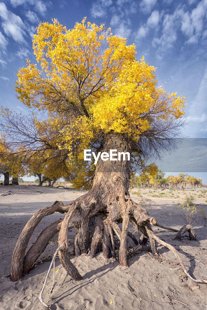 TREE IN SUNLIGHT AGAINST SKY