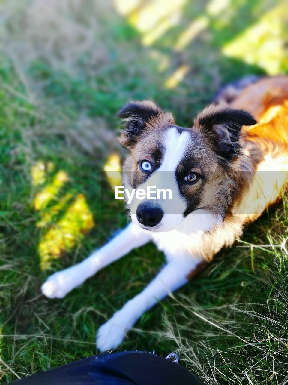 one animal, mammal, canine, domestic, dog, domestic animals, pets, animal themes, animal, vertebrate, grass, field, plant, land, nature, looking at camera, day, portrait, no people, selective focus, outdoors, animal head
