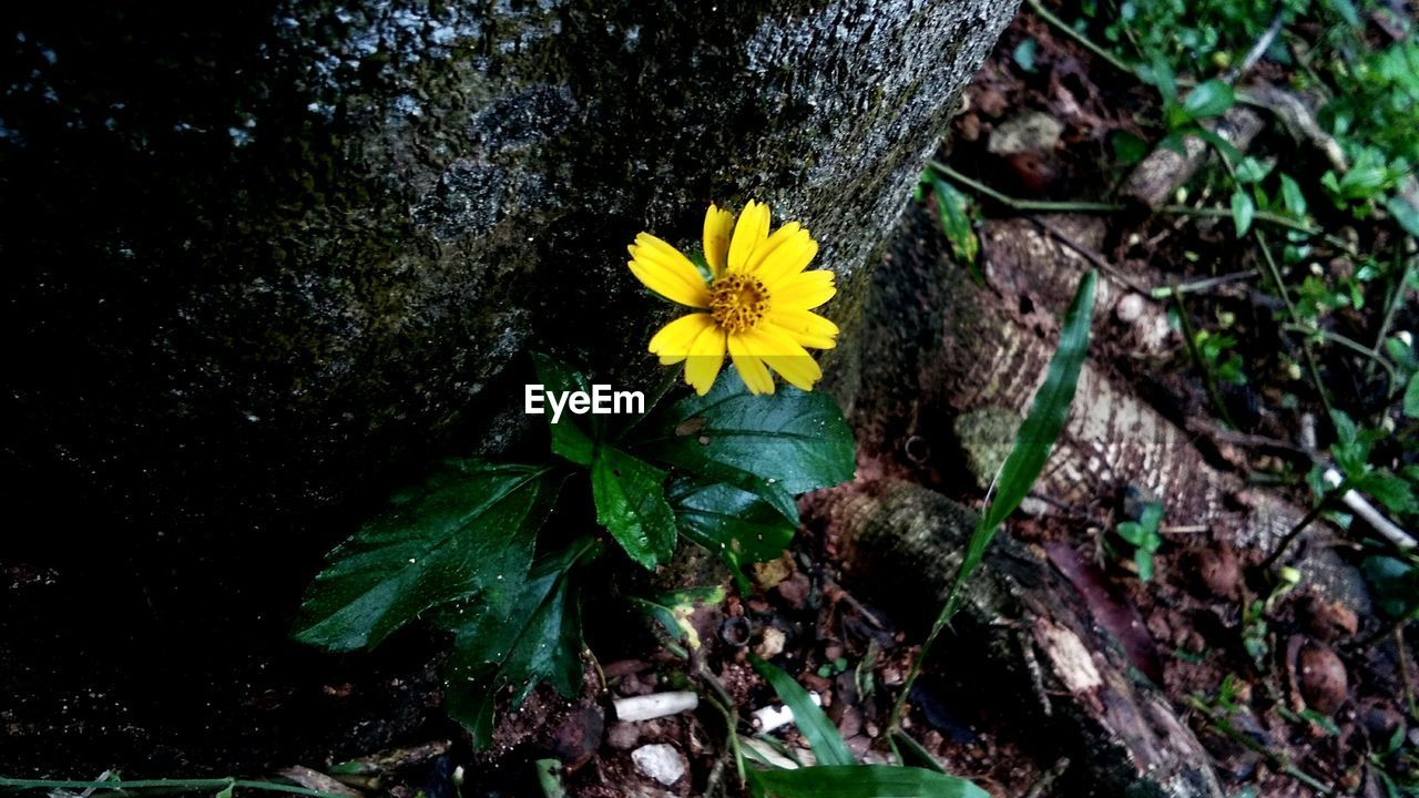 flower, growth, fragility, yellow, nature, petal, plant, beauty in nature, blooming, freshness, no people, flower head, outdoors, leaf, day, close-up