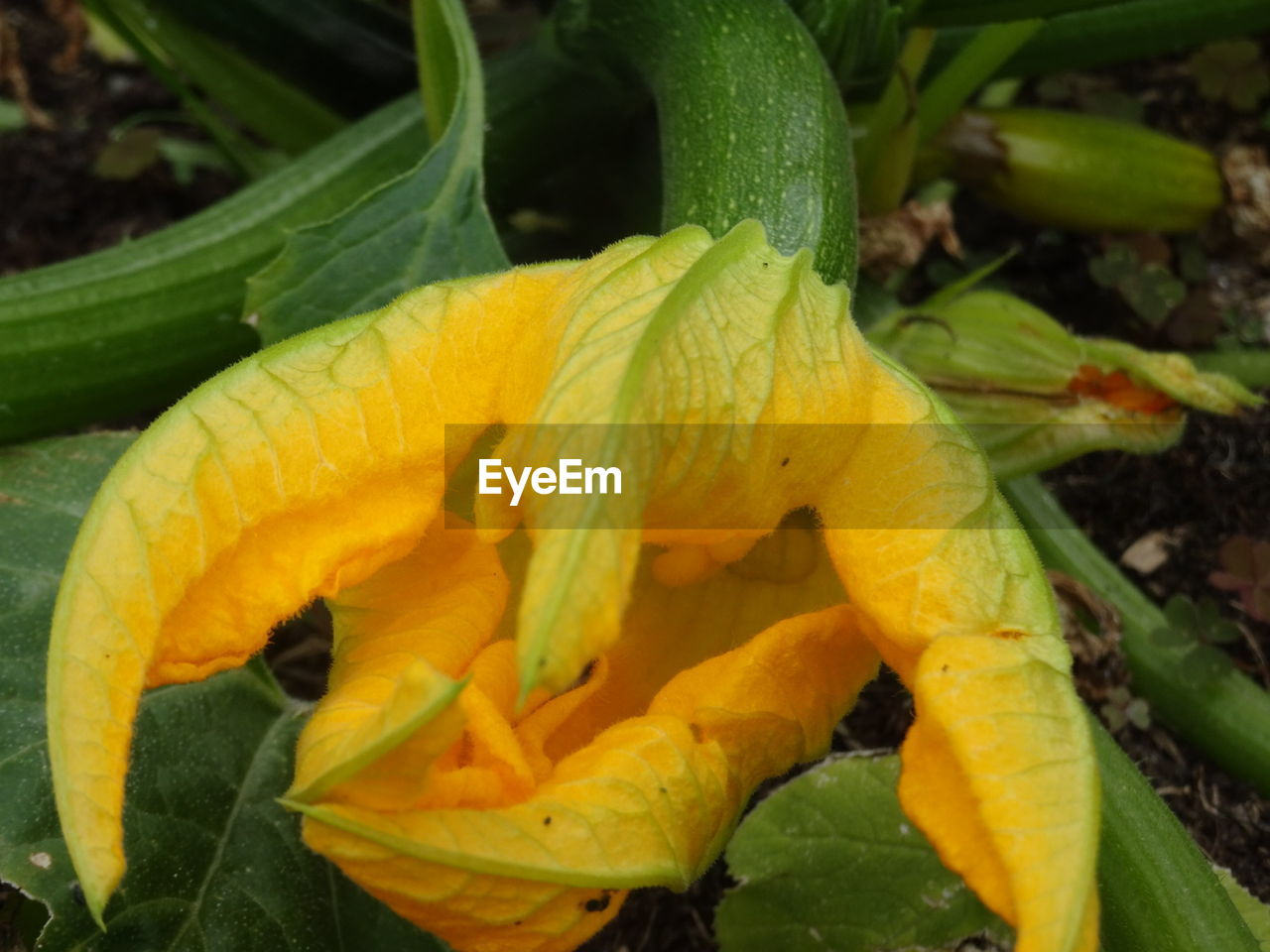 flower, yellow, growth, petal, nature, fragility, freshness, beauty in nature, close-up, flower head, green color, plant, no people, day, outdoors, leaf, wet, day lily