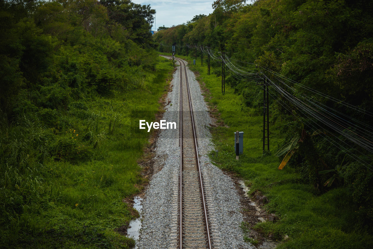 plant, transportation, tree, direction, the way forward, rail transportation, nature, green color, diminishing perspective, railroad track, track, no people, growth, road, land, tranquility, day, tranquil scene, beauty in nature, landscape, outdoors, long, parallel