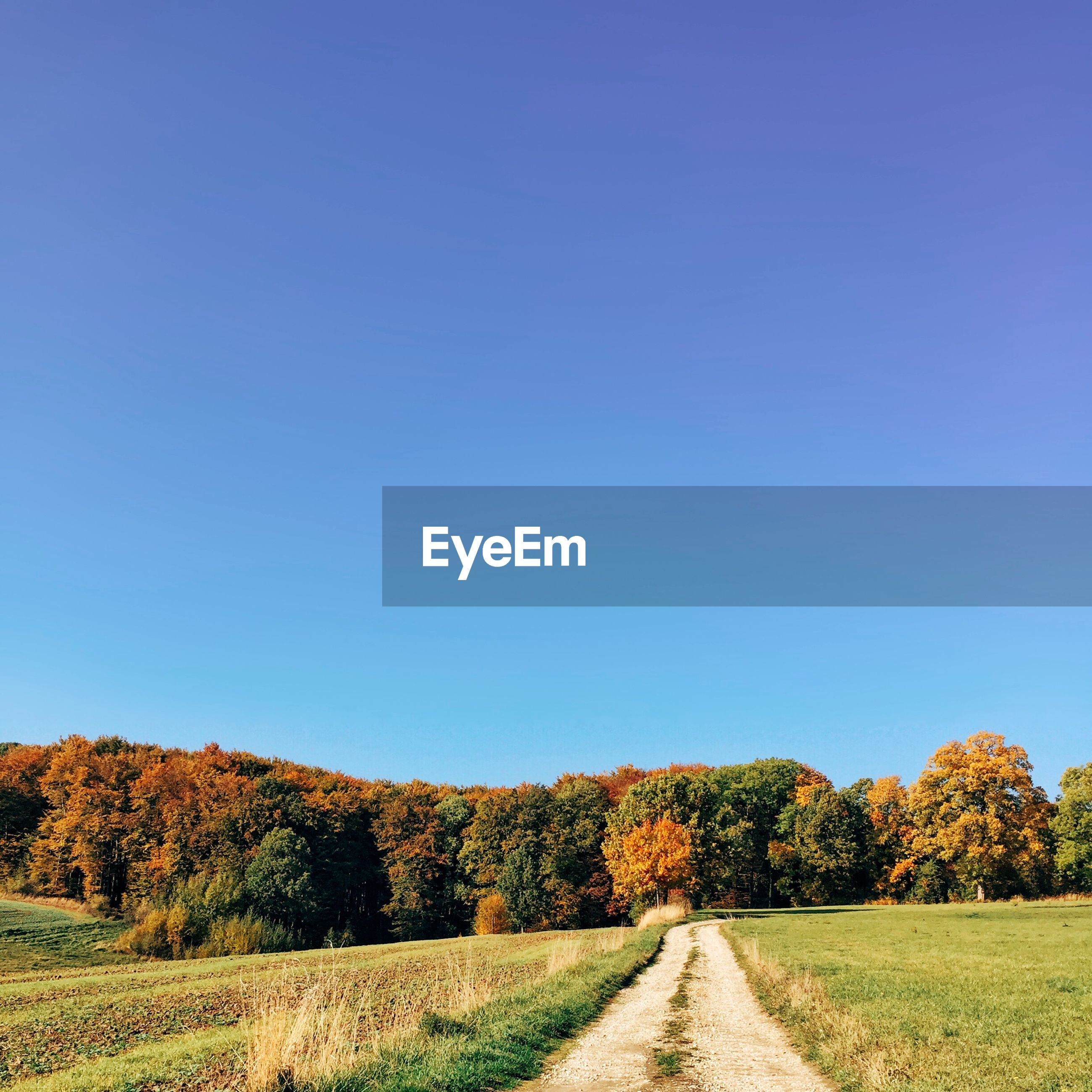 Footpath amidst grassy field by trees against clear sky during autumn