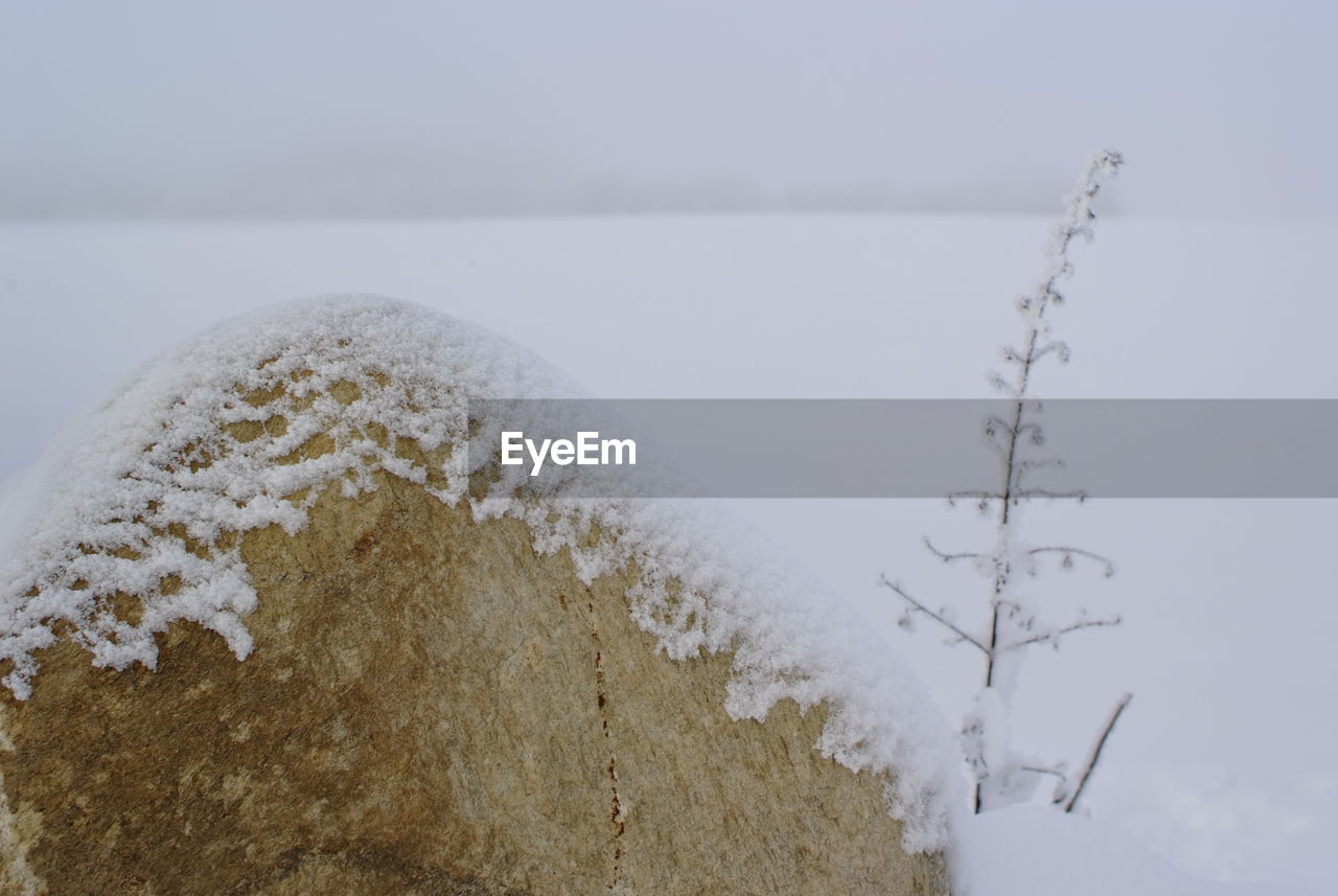 winter, cold temperature, snow, nature, no people, day, close-up, beauty in nature, outdoors, water, sky, freshness