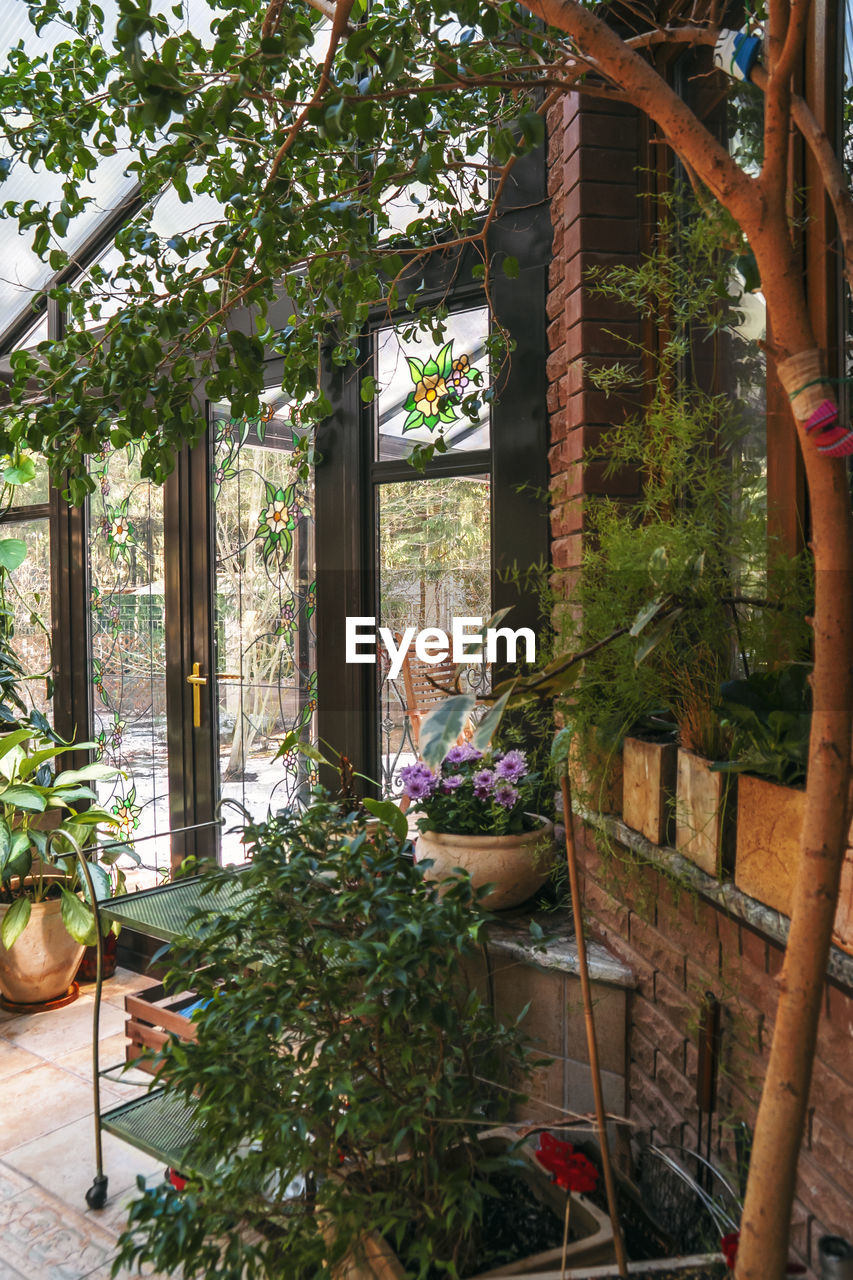 POTTED PLANTS ON TABLE BY WINDOW AGAINST BUILDING