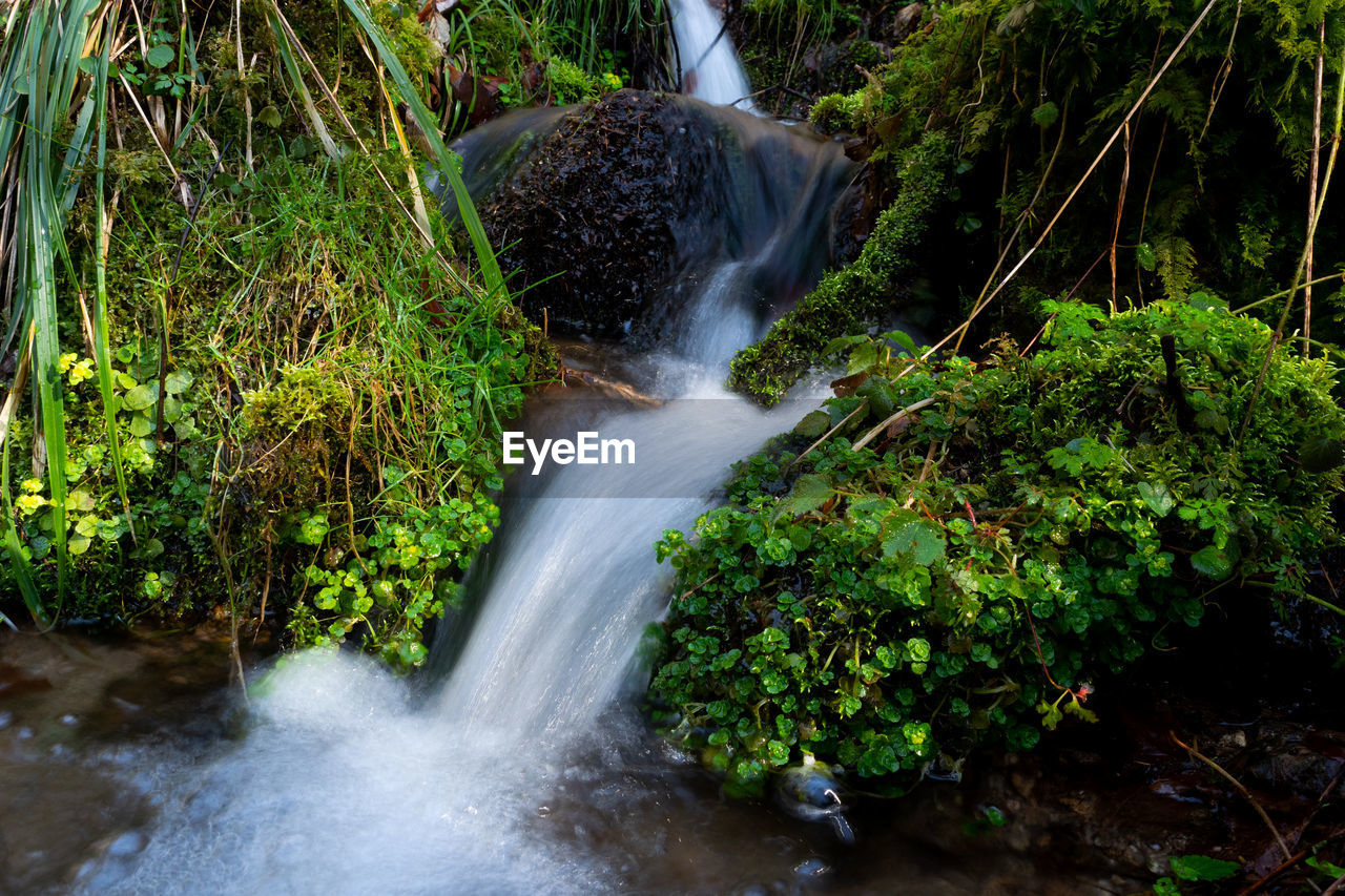 motion, plant, long exposure, water, blurred motion, waterfall, flowing water, tree, scenics - nature, forest, beauty in nature, nature, land, rock, solid, growth, rock - object, flowing, day, no people, outdoors, rainforest, falling water, power in nature