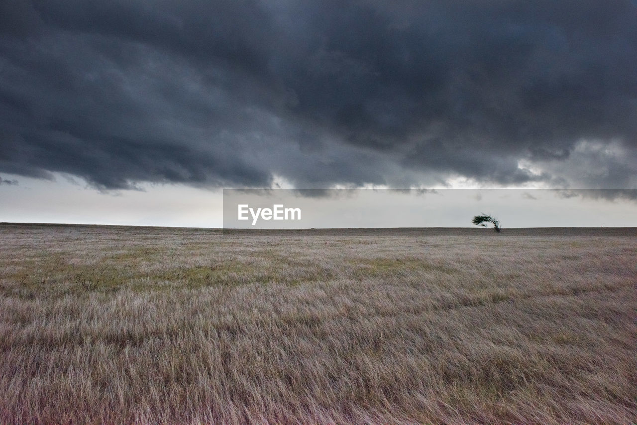 field, landscape, nature, cloud - sky, sky, beauty in nature, tranquil scene, outdoors, horizon over land, scenics, grass, day, tranquility, storm cloud, rural scene, no people, mammal