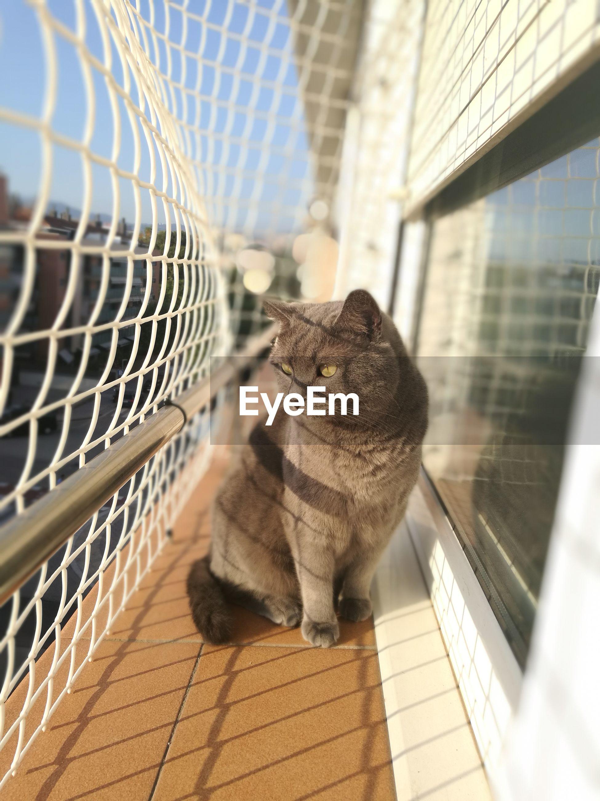 CLOSE-UP OF CAT ON CARPET