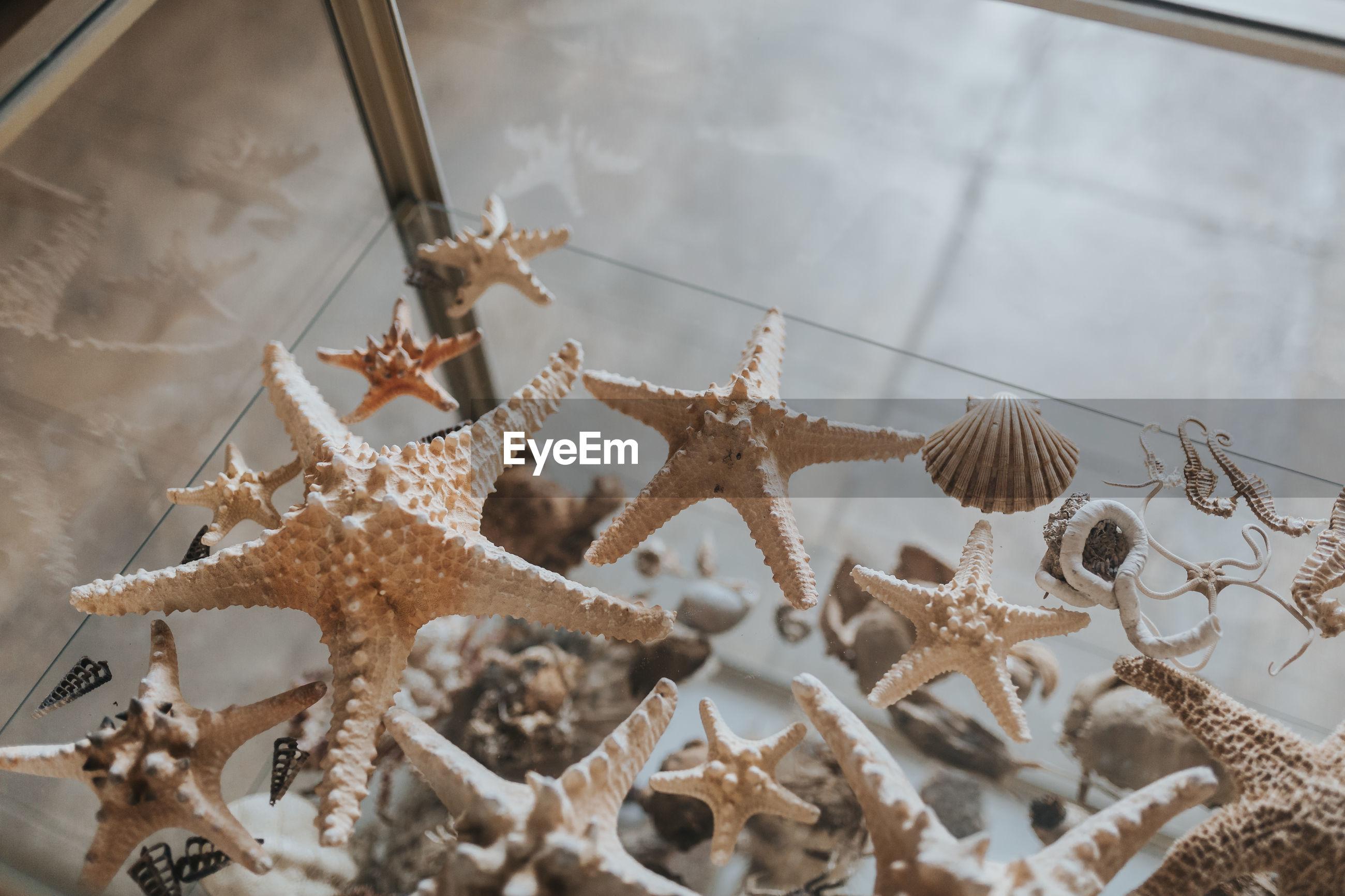 High angle view of starfish