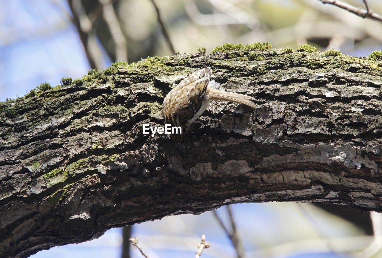 tree, focus on foreground, day, no people, tree trunk, low angle view, outdoors, nature, textured, branch, close-up, beauty in nature, animal themes