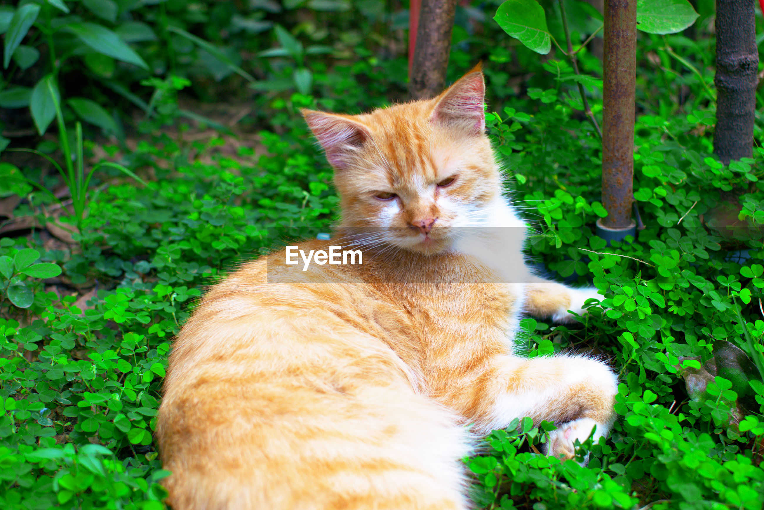 Cat resting on a green plants