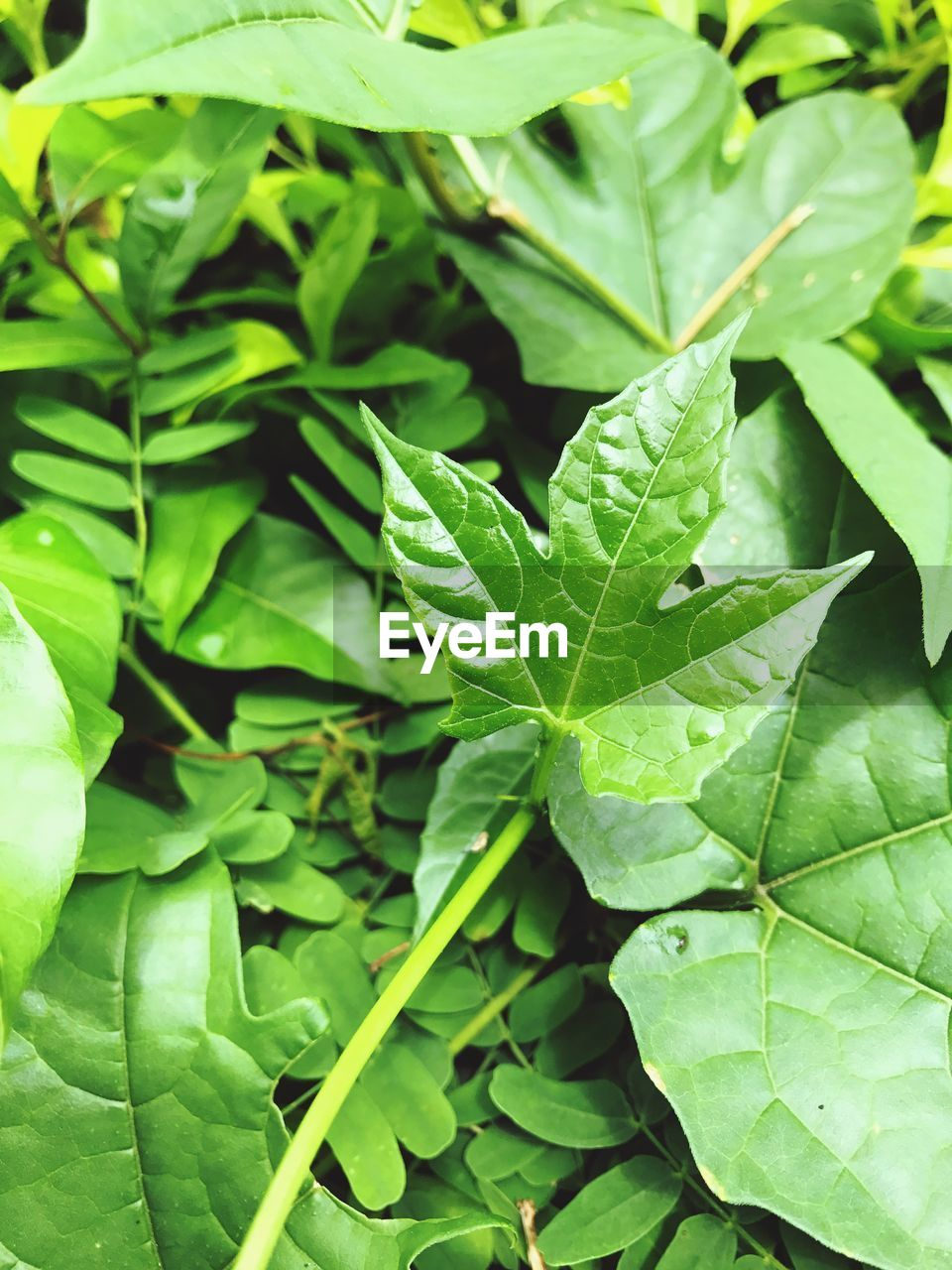 leaf, plant part, green color, growth, plant, nature, close-up, beauty in nature, no people, day, freshness, vegetable, food and drink, leaves, full frame, outdoors, high angle view, food, leaf vein, herb