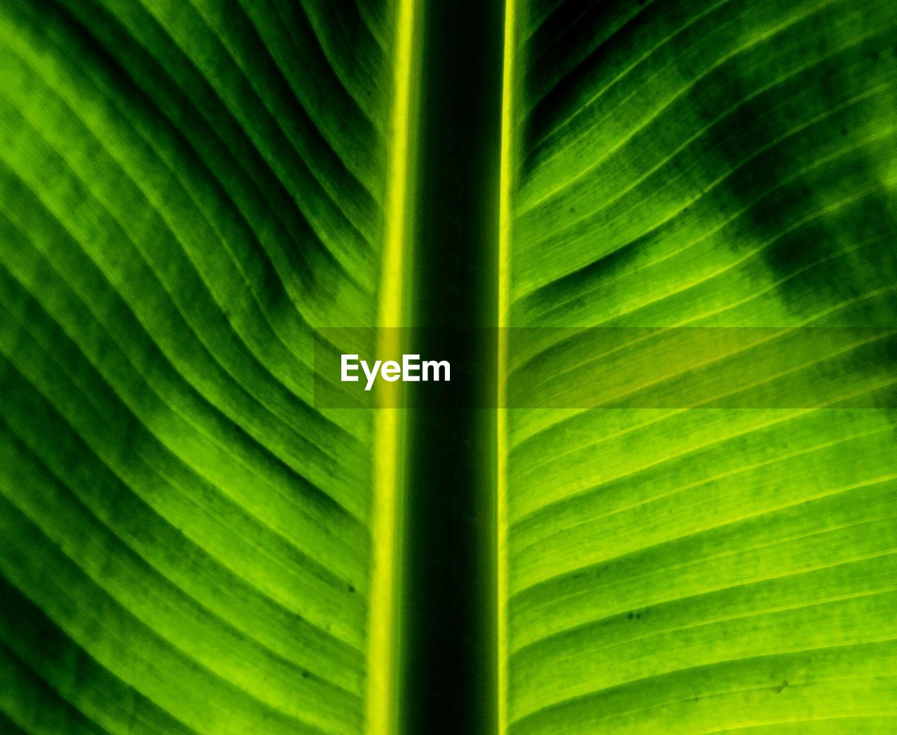 green color, leaf, plant part, plant, growth, palm tree, backgrounds, close-up, full frame, no people, nature, beauty in nature, palm leaf, natural pattern, leaf vein, pattern, day, tropical climate, leaves, banana leaf, outdoors, blade of grass