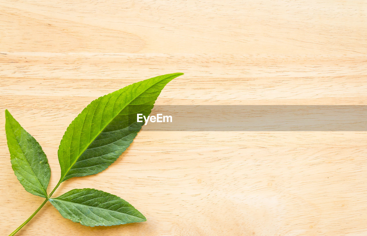 leaf, plant part, green color, wood - material, table, no people, close-up, freshness, indoors, nature, plant, food and drink, herb, still life, high angle view, directly above, wellbeing, food, backgrounds, wood, leaves, wood grain