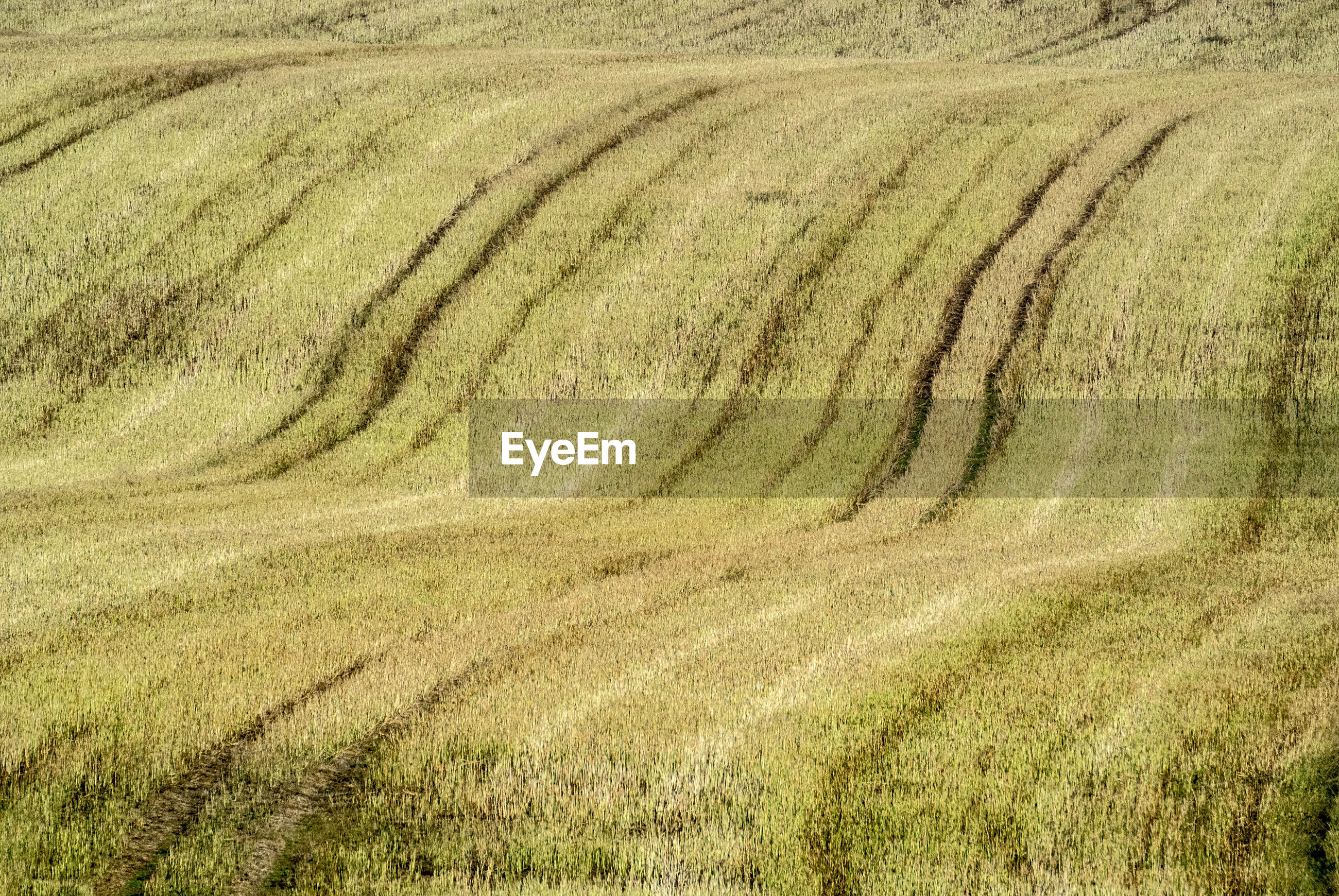 HIGH ANGLE VIEW OF FARM FIELD