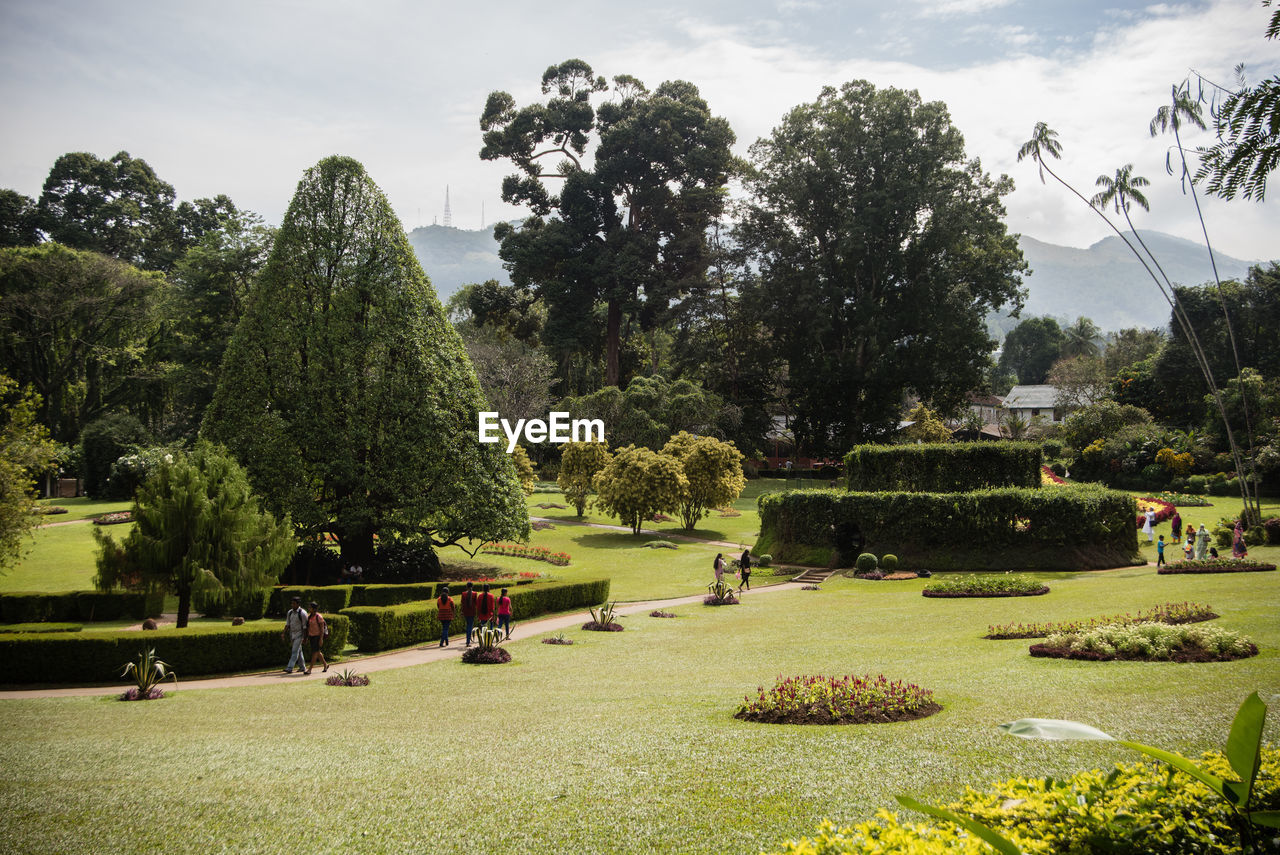 Hedge And Topiary In Ornamental Garden