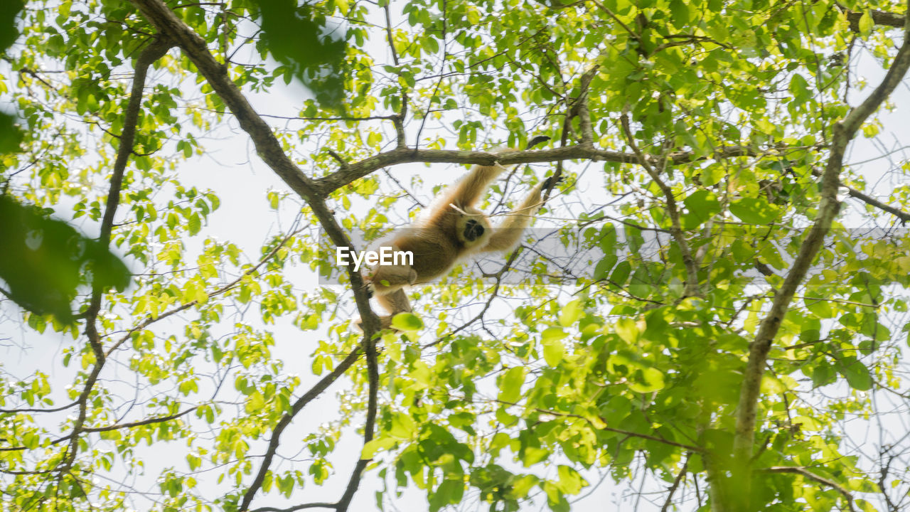 animal, one animal, animal themes, plant, tree, mammal, low angle view, branch, animals in the wild, animal wildlife, vertebrate, nature, no people, day, growth, leaf, green color, plant part, primate, outdoors, directly below