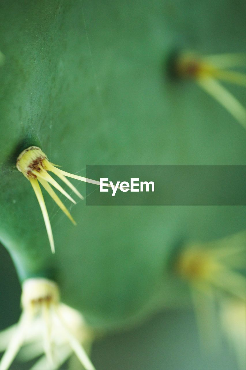 close-up, no people, plant, focus on foreground, flower, nature, day, growth, outdoors, fragility, beauty in nature, flower head