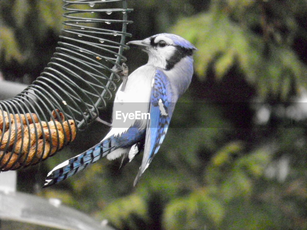 animal themes, animal, vertebrate, one animal, animal wildlife, animals in the wild, bird, no people, tree, focus on foreground, plant, nature, mammal, day, perching, close-up, outdoors, side view