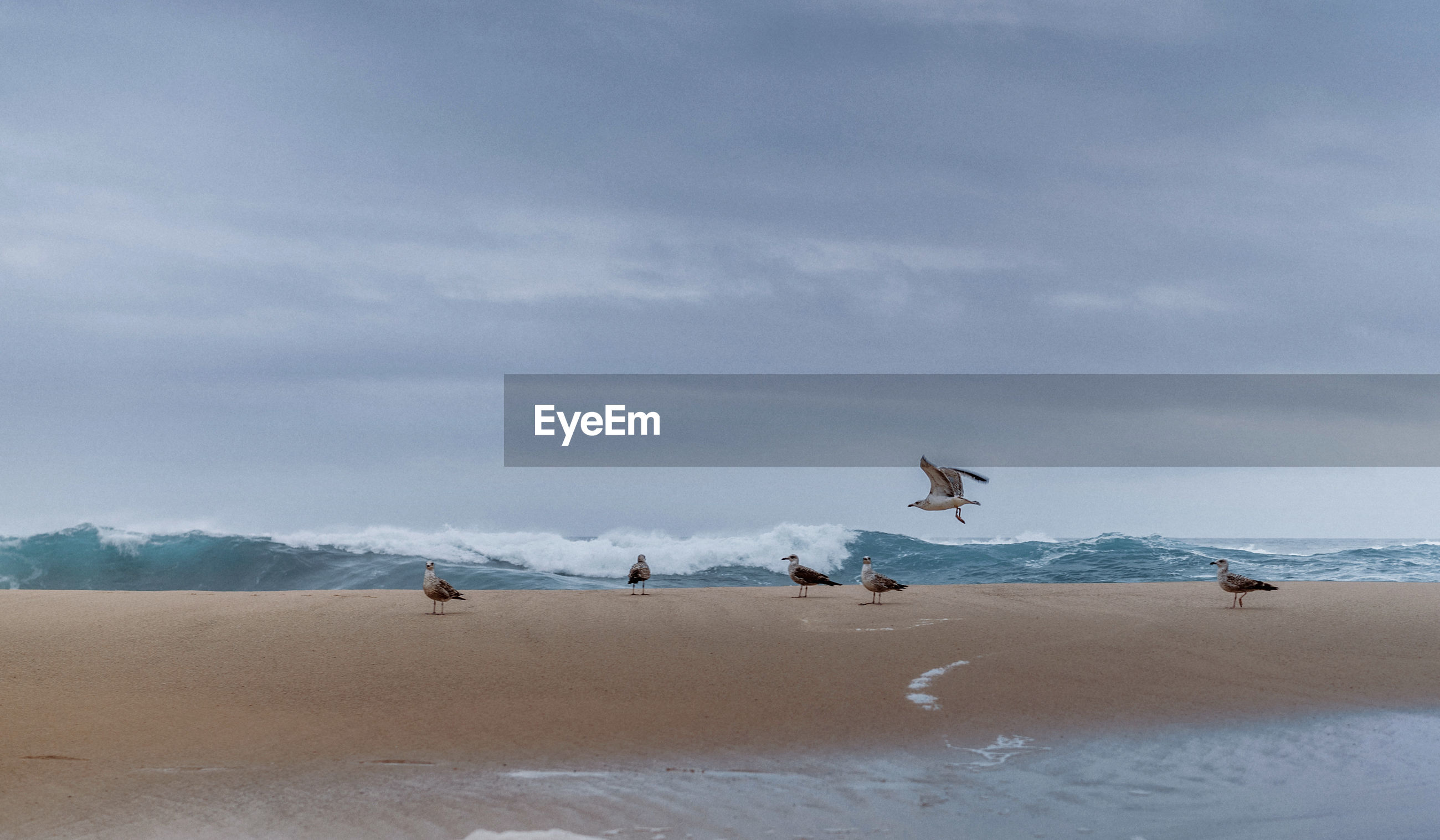 VIEW OF SEAGULLS ON SAND LAND