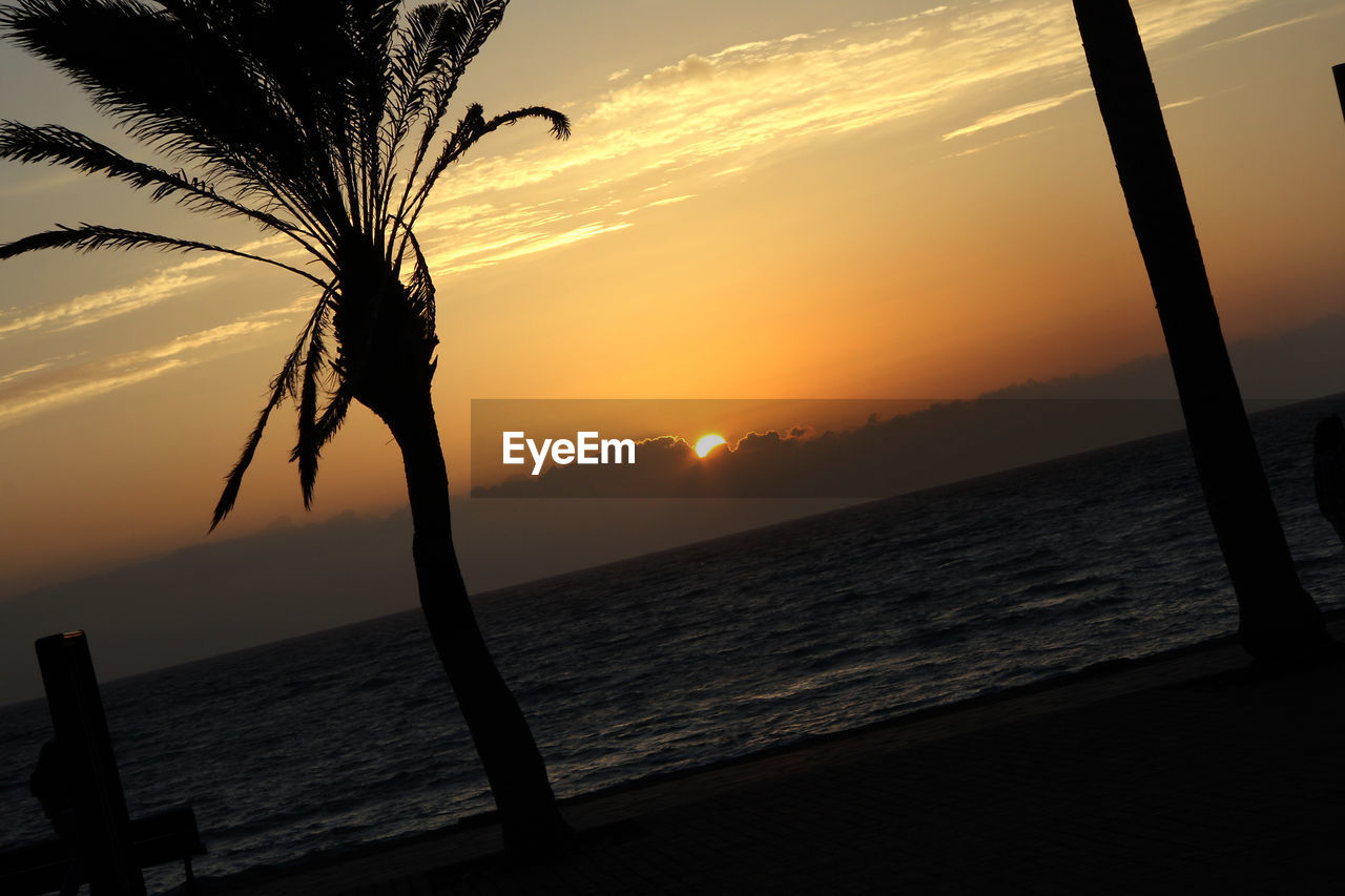 sunset, sea, beauty in nature, scenics, water, nature, sun, orange color, horizon over water, tranquil scene, tranquility, silhouette, no people, sky, tree, outdoors, beach, close-up