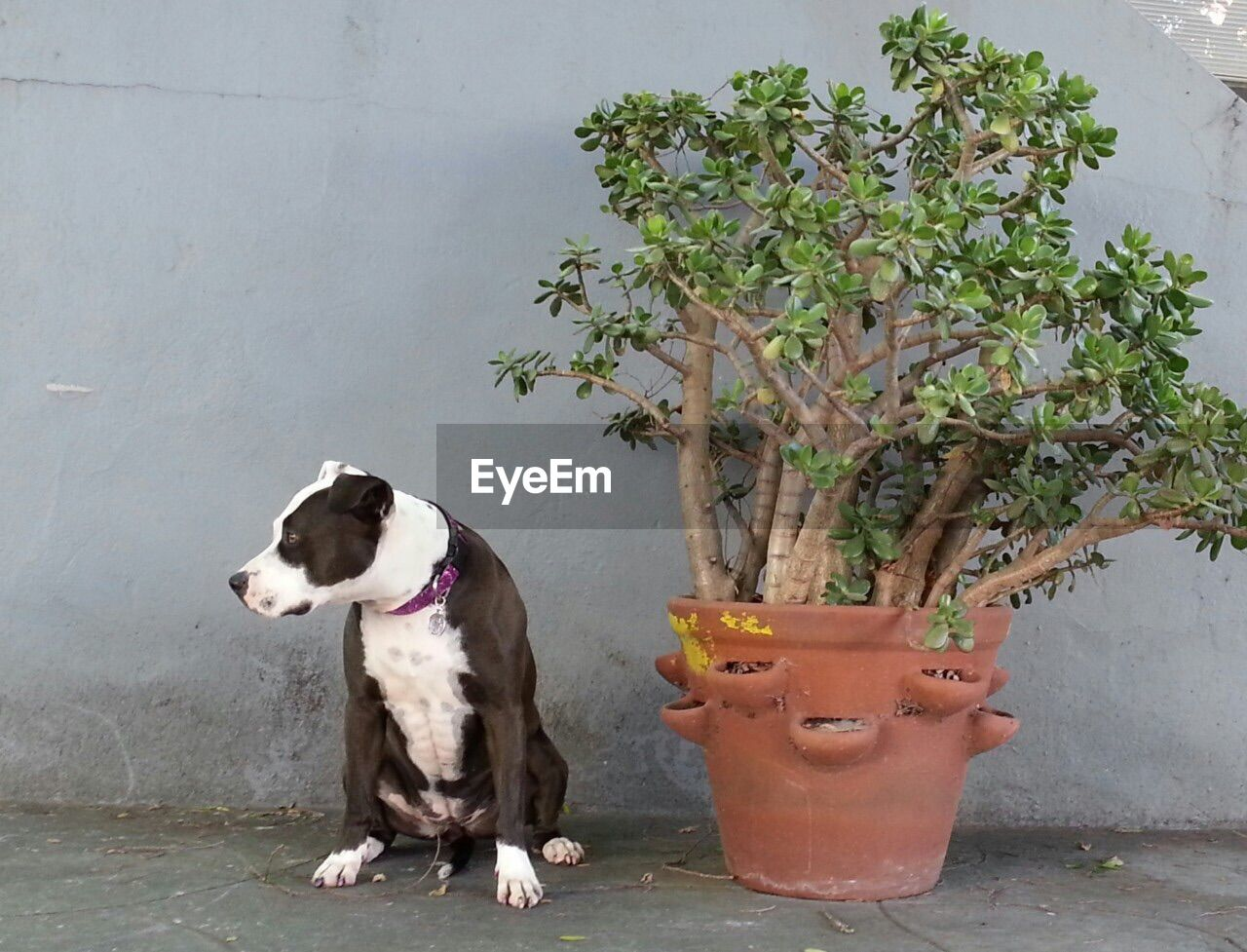 Sitting dog and potted plant