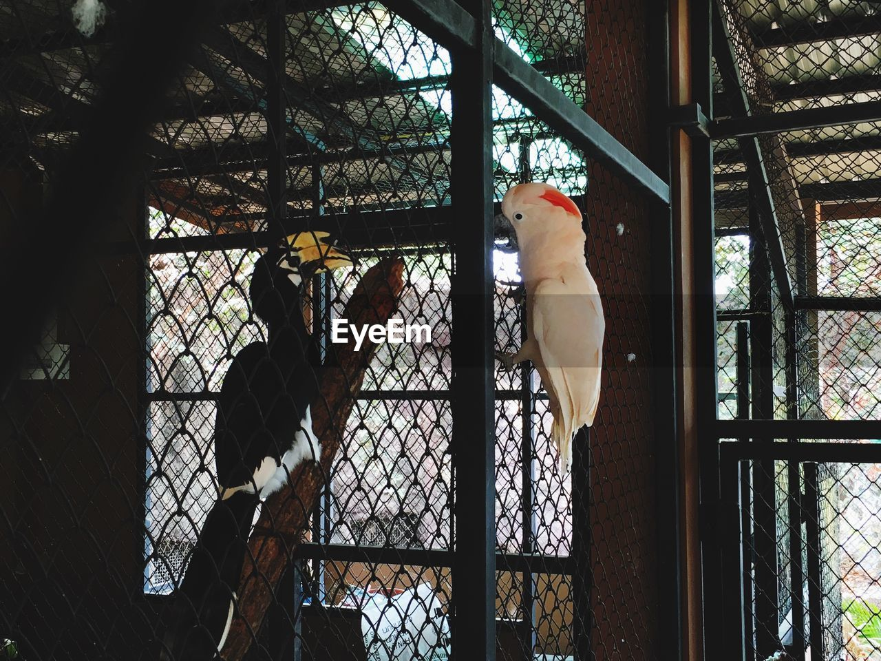 animal themes, bird, cage, indoors, domestic animals, one animal, day, low angle view, pets, no people, mammal, perching, tree