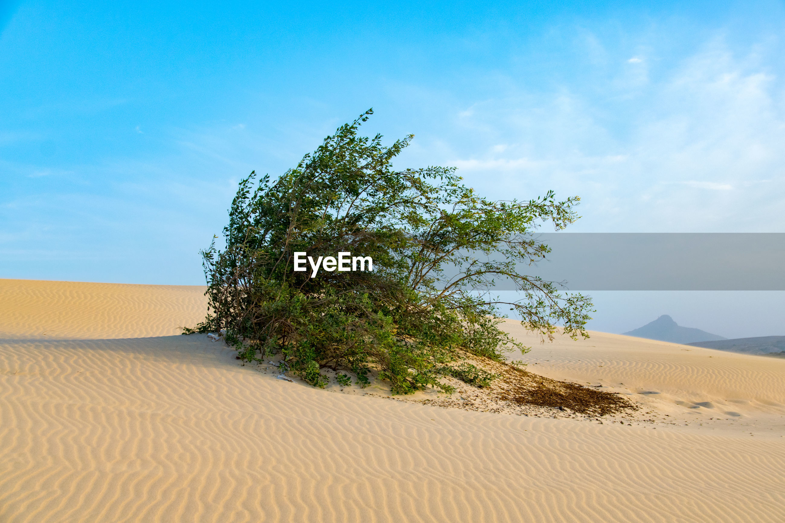 TREE ON SAND DUNE AGAINST SKY