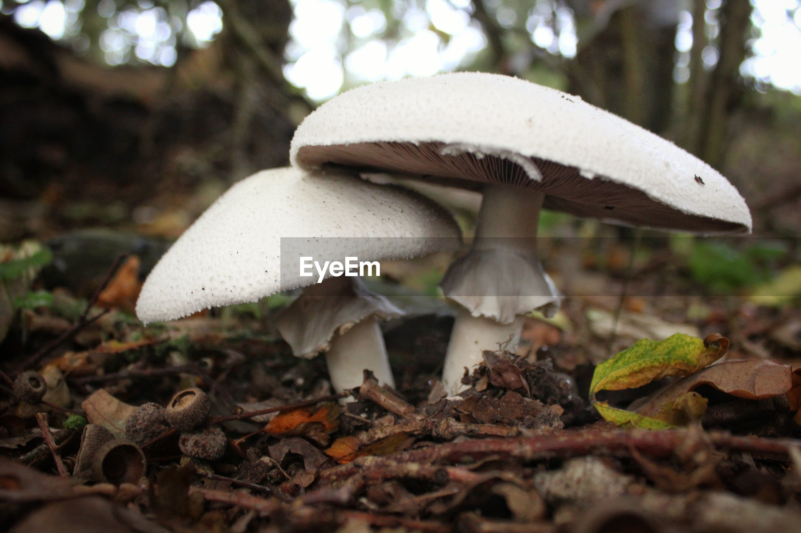 mushroom, fungus, vegetable, food, growth, land, plant, toadstool, close-up, nature, no people, tree, day, field, focus on foreground, forest, edible mushroom, beauty in nature, food and drink, fly agaric mushroom, outdoors, surface level