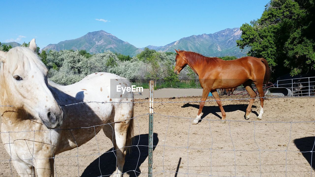 domestic animals, mammal, animal themes, livestock, vertebrate, domestic, animal, pets, group of animals, sunlight, mountain, nature, day, herbivorous, shadow, animal wildlife, cow, no people, horse, standing, outdoors, ranch