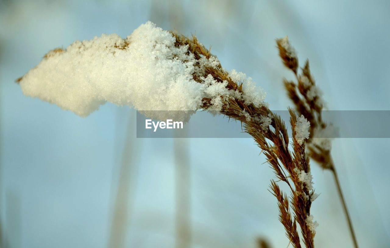 plant, close-up, no people, nature, day, beauty in nature, sky, focus on foreground, growth, outdoors, plant stem, selective focus, cold temperature, smoke - physical structure, snow, tranquility, low angle view, white color, winter, twig, pollution