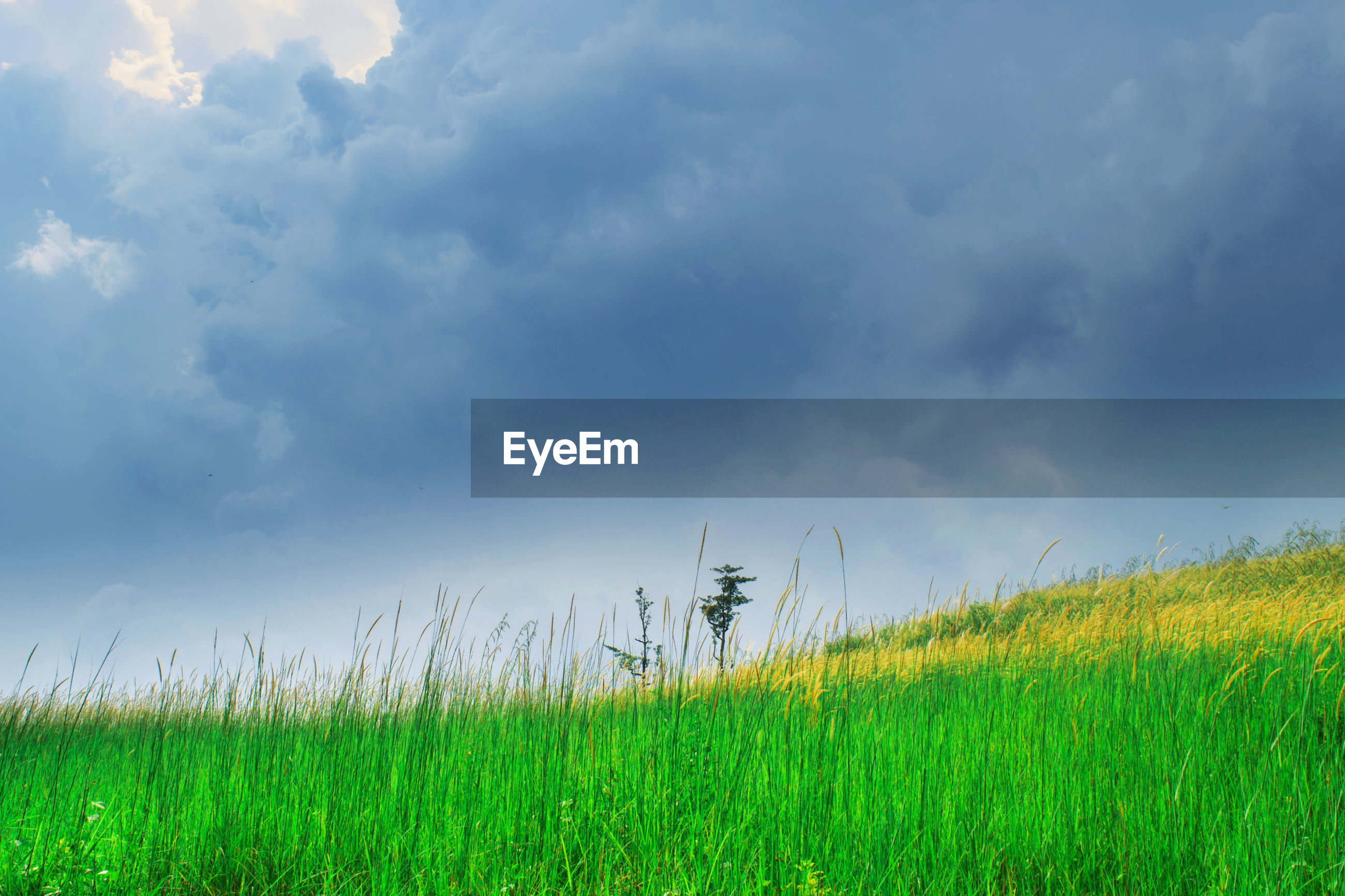VIEW OF GRASSY FIELD AGAINST CLOUDY SKY