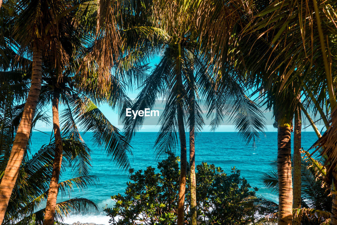 tree, tropical climate, plant, palm tree, growth, beauty in nature, land, tranquility, nature, water, scenics - nature, sea, no people, beach, sky, tranquil scene, trunk, tree trunk, leaf, palm leaf, outdoors, coconut palm tree, tropical tree, turquoise colored