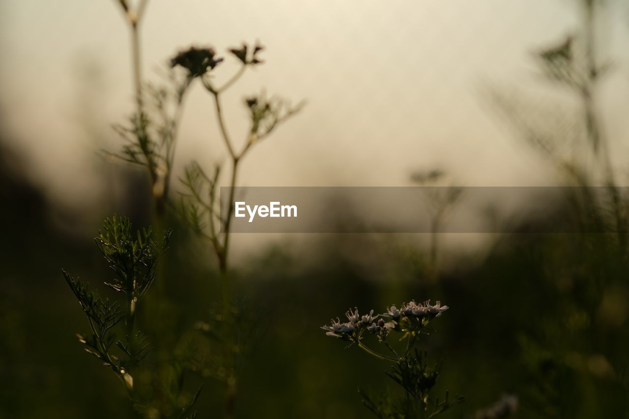nature, growth, plant, outdoors, no people, beauty in nature, day, close-up, flower, freshness