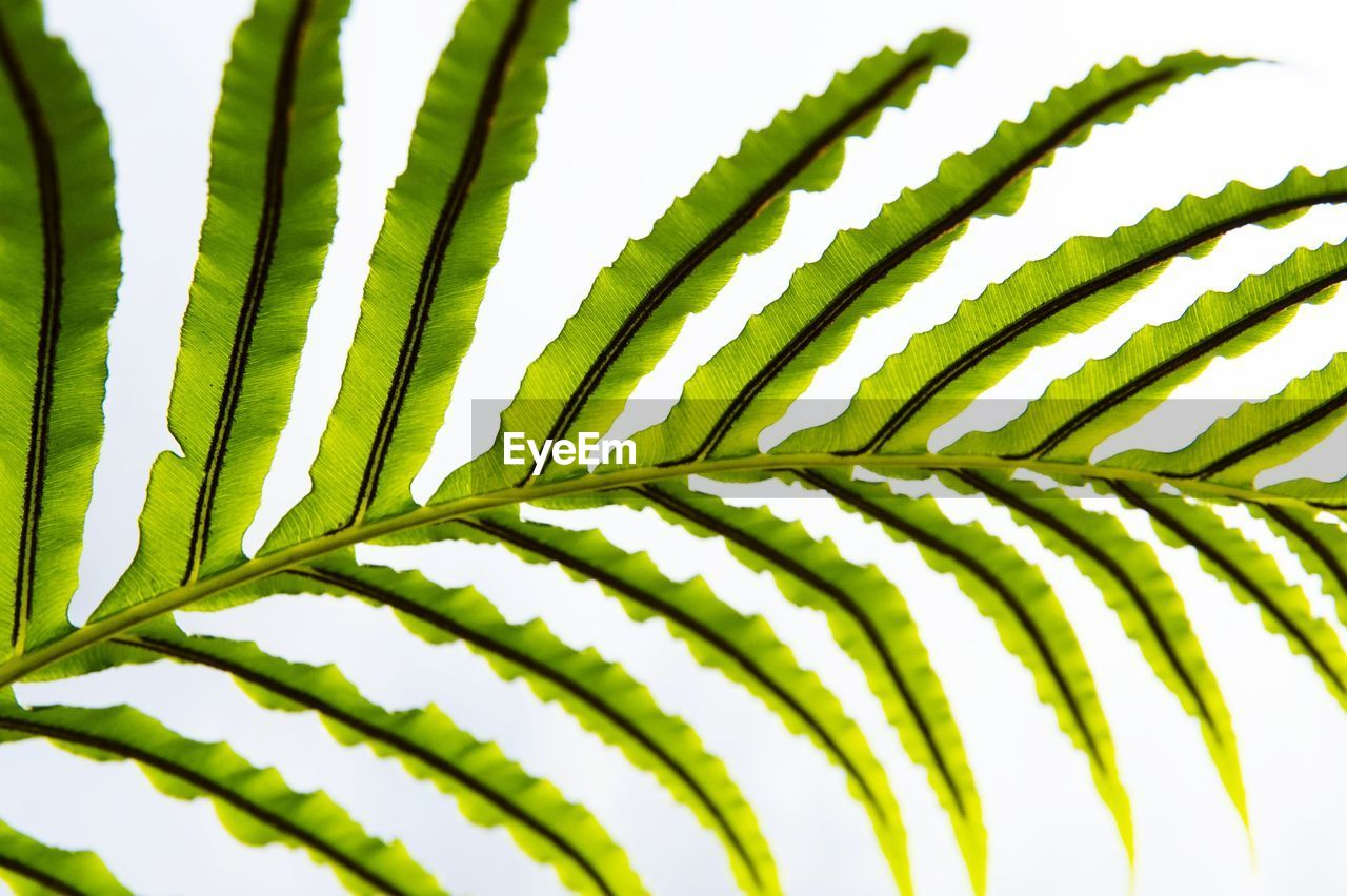 green color, growth, leaf, close-up, plant part, no people, plant, nature, beauty in nature, natural pattern, selective focus, pattern, day, palm tree, focus on foreground, outdoors, sunlight, frond, full frame, freshness, palm leaf, leaves