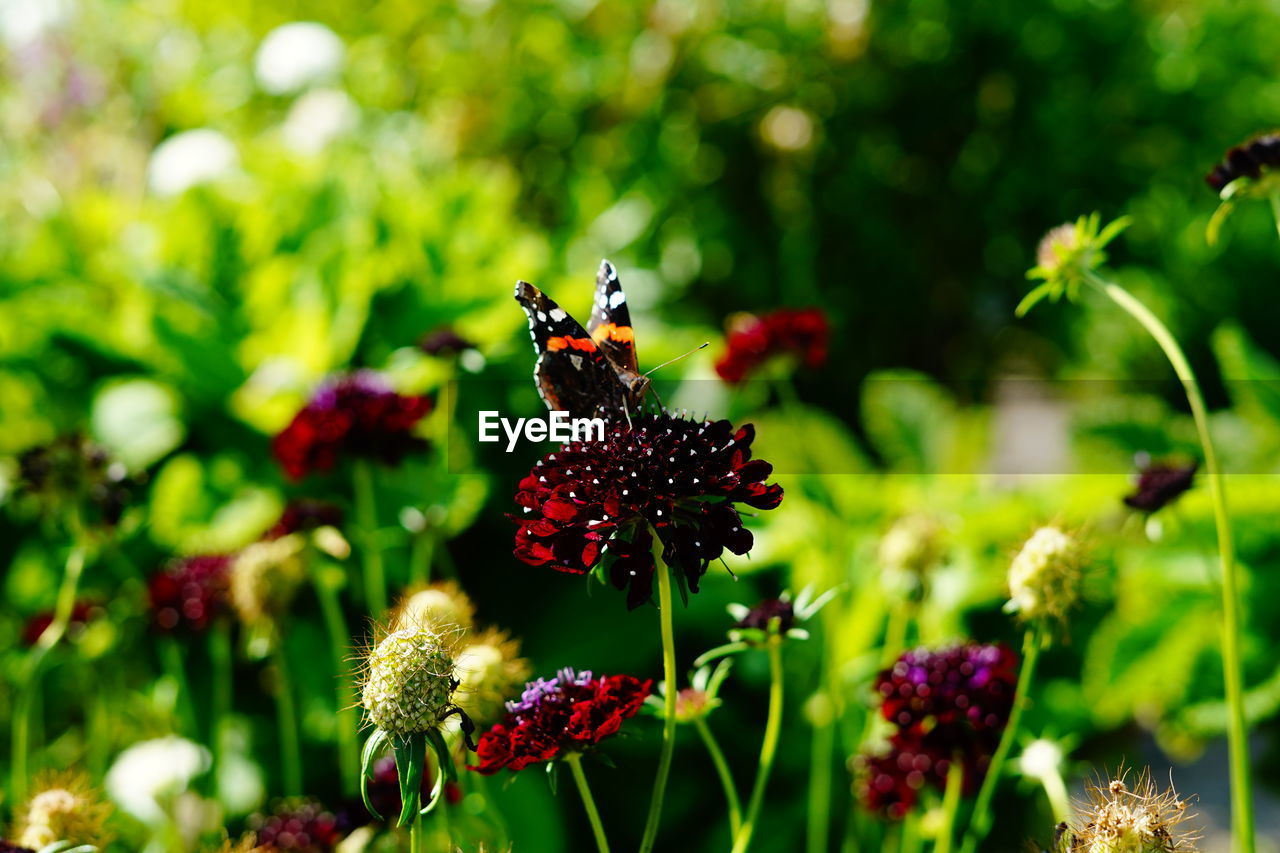 flower, flowering plant, plant, freshness, beauty in nature, fragility, vulnerability, insect, animal, invertebrate, animal themes, growth, animals in the wild, animal wildlife, close-up, petal, flower head, one animal, pollination, focus on foreground, no people