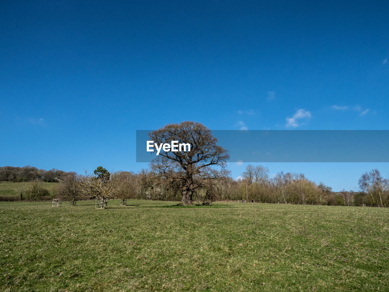 plant, sky, tree, field, land, landscape, environment, tranquility, tranquil scene, beauty in nature, blue, scenics - nature, grass, nature, non-urban scene, day, growth, green color, no people, copy space, outdoors, isolated
