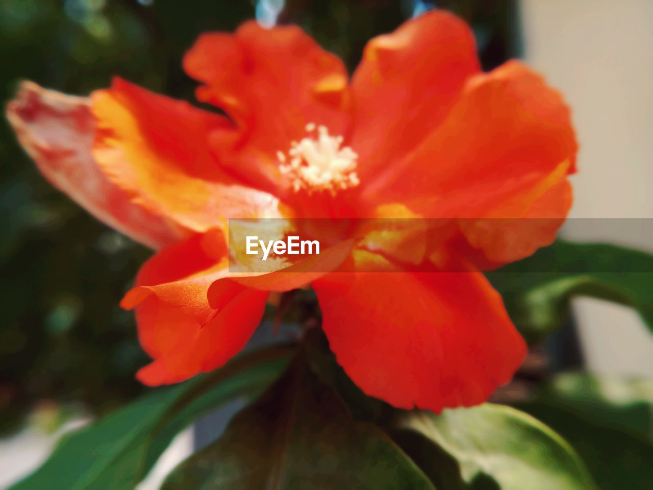 flower, petal, nature, beauty in nature, plant, growth, orange color, fragility, flower head, close-up, outdoors, freshness, no people, day, blooming