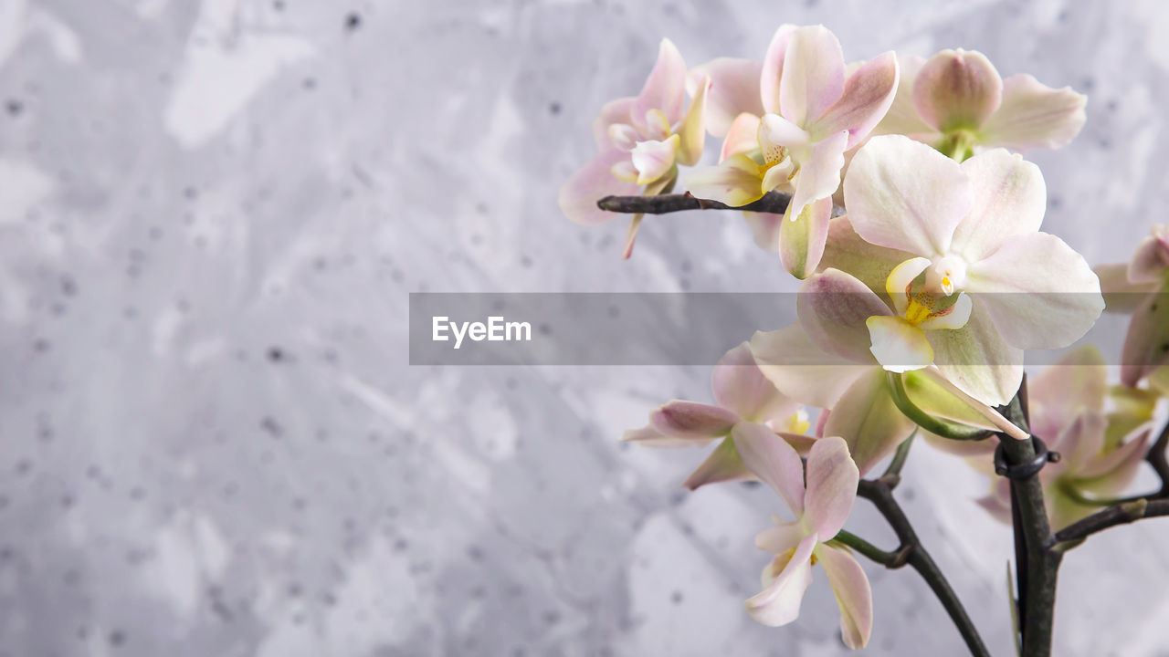 flower, flowering plant, fragility, freshness, vulnerability, plant, beauty in nature, petal, growth, close-up, flower head, inflorescence, nature, white color, day, no people, springtime, outdoors, botany, selective focus, pollen, cherry blossom