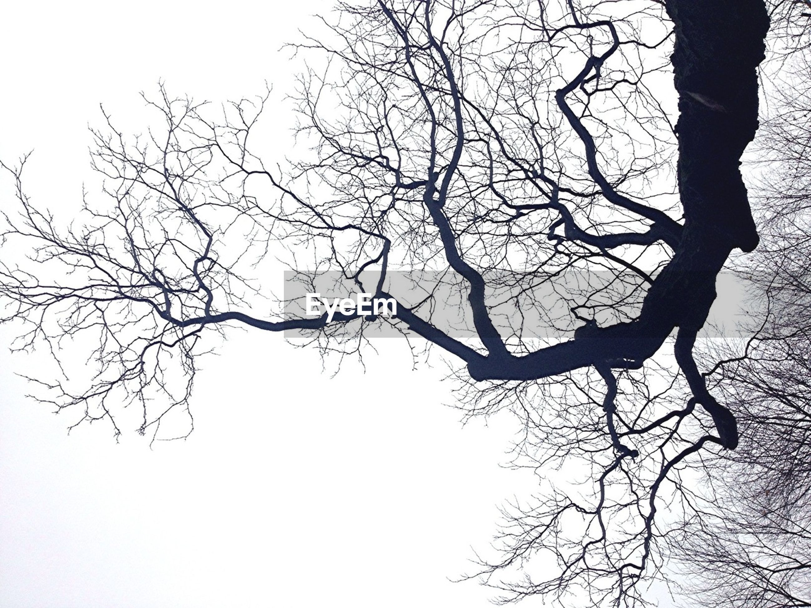 bare tree, branch, tree, low angle view, clear sky, nature, tranquility, tree trunk, silhouette, sky, outdoors, day, beauty in nature, no people, winter, season, scenics, growth, tranquil scene, weather