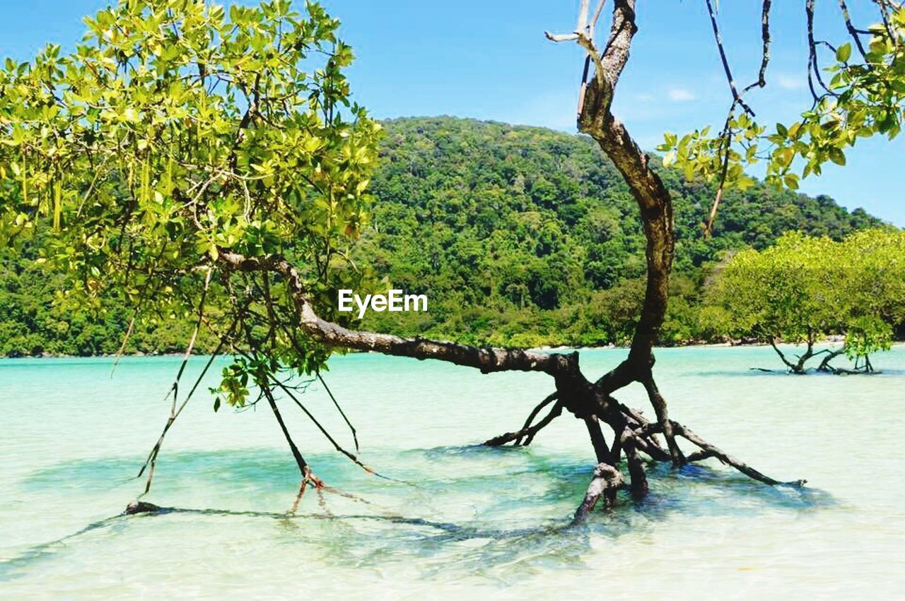 tree, nature, scenics, beauty in nature, no people, sky, water, day, sea, outdoors, landscape, branch, blue, growth