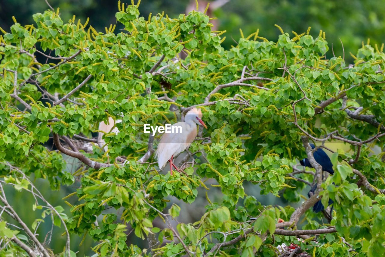 vertebrate, animal themes, animals in the wild, animal, animal wildlife, bird, plant, green color, perching, tree, nature, plant part, no people, growth, branch, leaf, group of animals, day, beauty in nature, outdoors