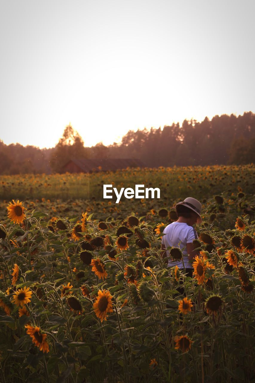 Woman standing at sunflower farm against clear sky