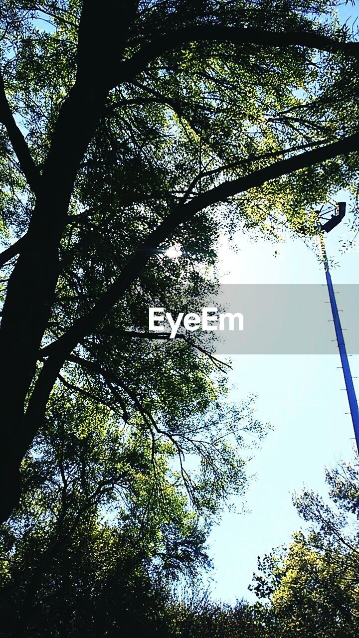 tree, low angle view, growth, branch, nature, day, no people, forest, outdoors, beauty in nature, tree trunk, tranquility, sky
