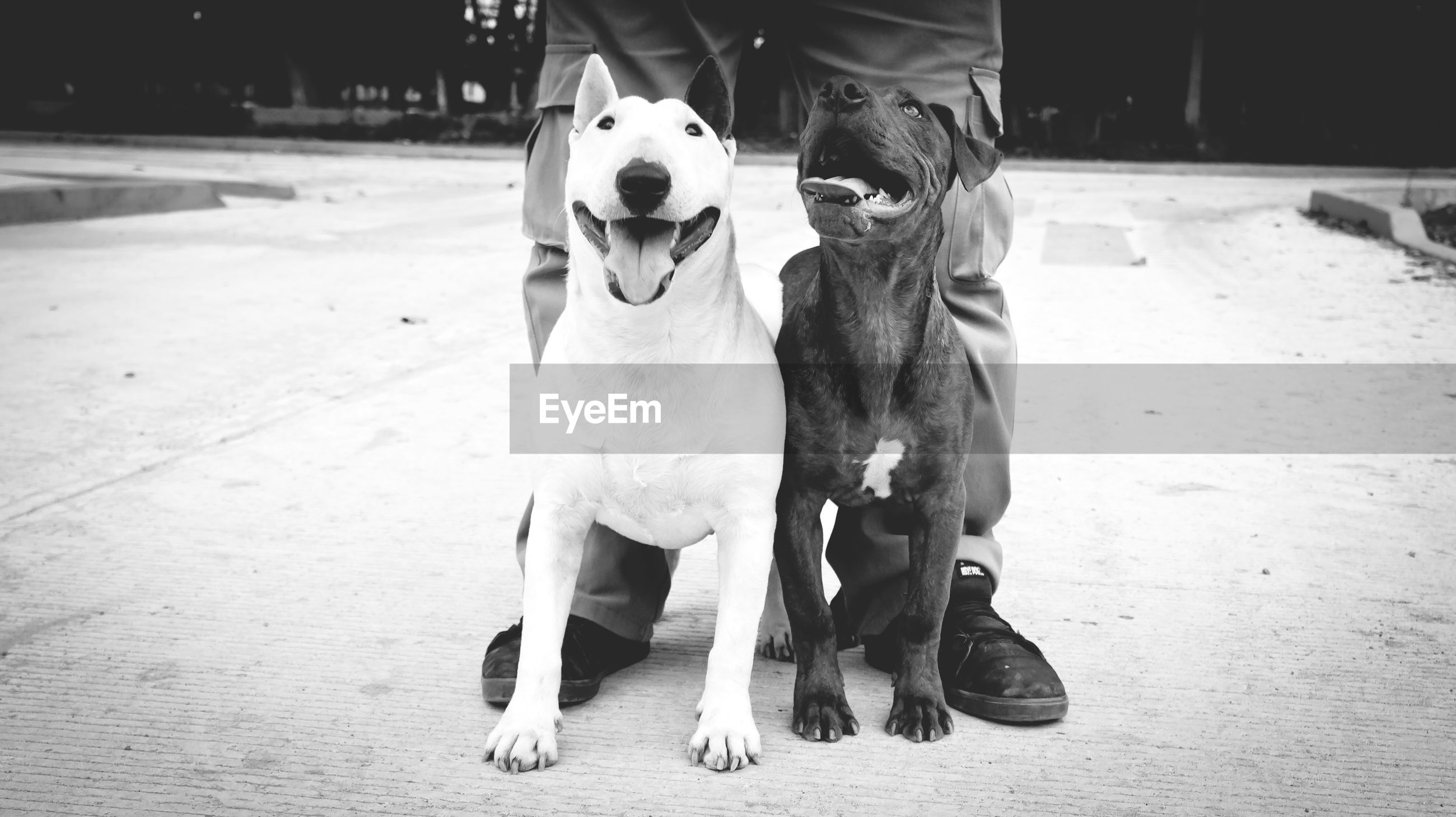 animal themes, domestic animals, standing, horse, mammal, one animal, front view, full length, lifestyles, dog, men, portrait, looking at camera, casual clothing, outdoors, livestock, street, leisure activity