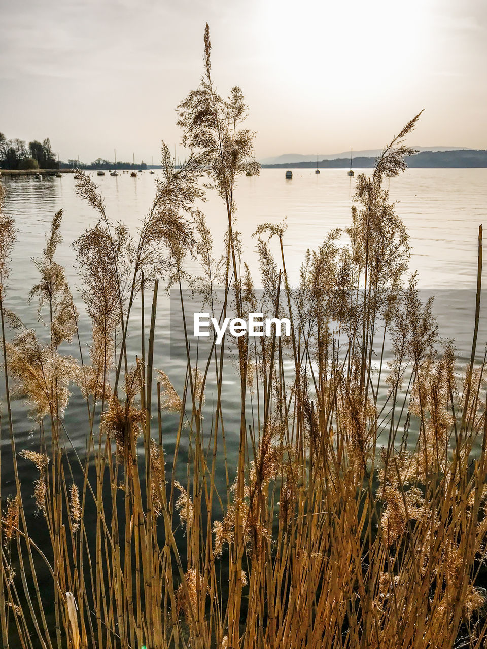 water, tranquility, plant, sky, beauty in nature, tranquil scene, nature, sea, scenics - nature, no people, growth, grass, day, beach, non-urban scene, horizon, outdoors, horizon over water, timothy grass, marram grass