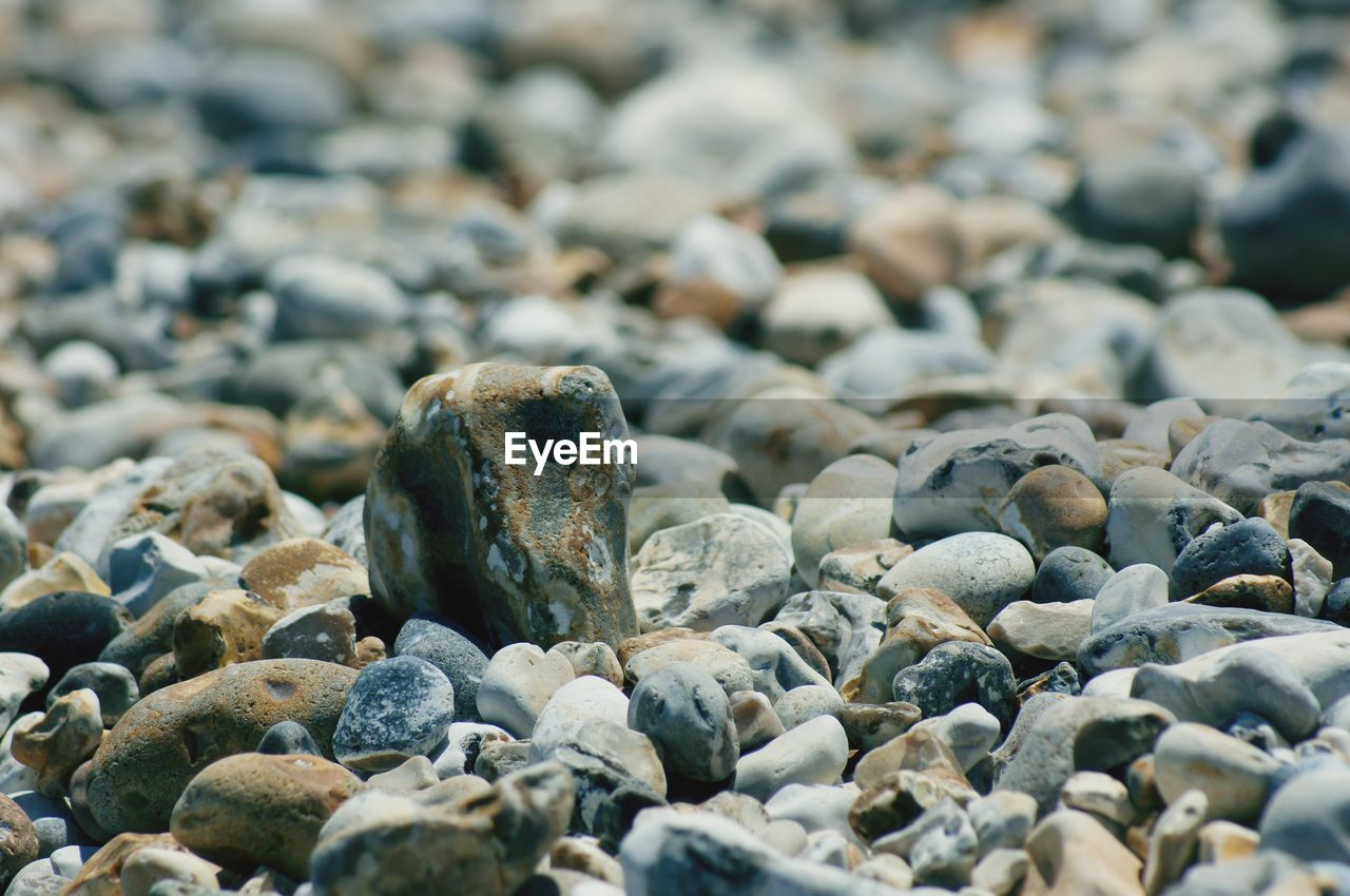 solid, pebble, rock, land, animal wildlife, beach, no people, nature, day, stone - object, stone, animals in the wild, animal, selective focus, rock - object, abundance, close-up, sea, animal themes, outdoors, marine