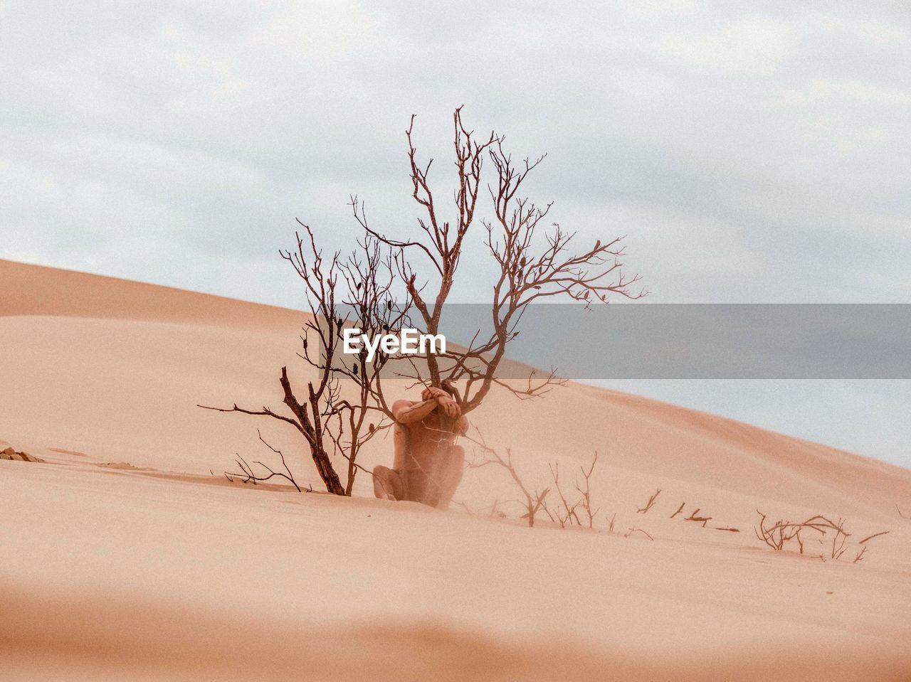 Bare Tree On Sand Dune In Desert Against Sky