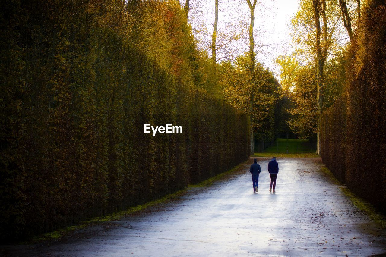 Rear View Of Couple Walking On Road Amidst Trees During Autumn